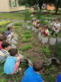 Вкусната биоградинка и прекрасните градинари от детската градина - ДГ Звездица-Зорница - Бургас